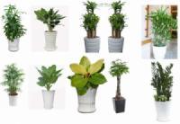 Một số cây dùng cho văn phòng và vai trò của cây xanh trong văn phòng