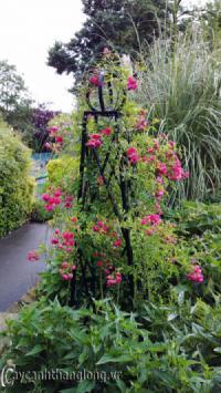 Giá sắt giàn hoa hồng 02