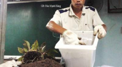 Kỹ thuật trồng, chăm sóc cây trong bồn chậu trước và sau trồng