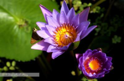 Yên hoa