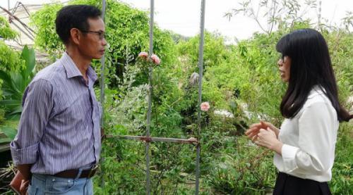 Tư vấn kỹ thuật lựa chọn giống Hoa Hồng ngoại tại Việt Nam