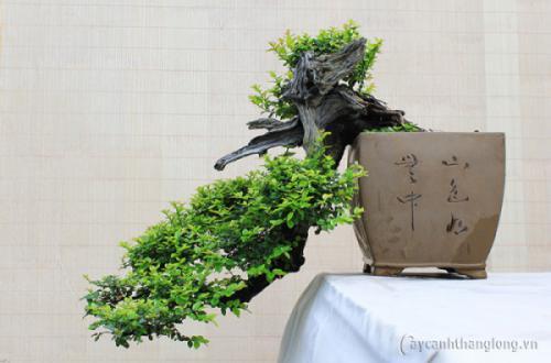 Bản tổng kết đánh giá về cuộc Triển lãm hoa & Nghệ thuật Bonsai 2017