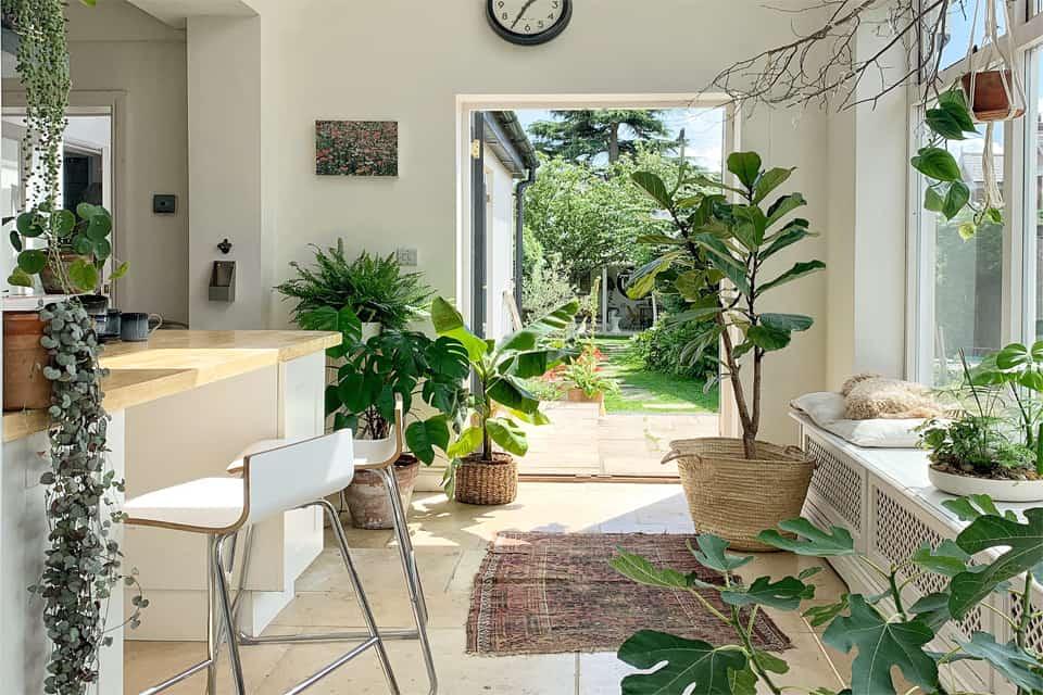 3 ý tưởng làm mát nhà cửa, văn phòng, chung cư với cây xanh cho ngày hè oi bức