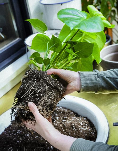 4 điều kiện tối quan trọng ảnh hưởng đến sự sinh trưởng và phát triển của cây nội thất bóng râm