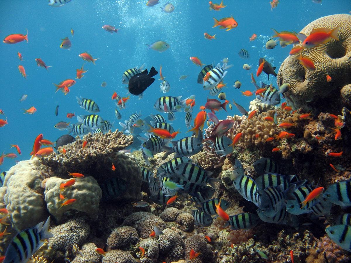 đảo Coral