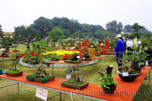 trưng bày hoa cây cảnh