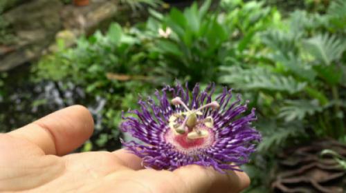 Sắc hoa tại công viên thực vật cảnh Việt Nam trong những ngày mưa đầu hạ