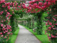 Cung cấp cây hoa cảnh và các sản phẩm nông nghiệp