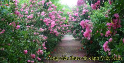 Giới thiệu Công viên thực vật cảnh Việt Nam