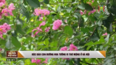 Độc đáo con đường hoa tường vi thơ mộng ở Hà Nội