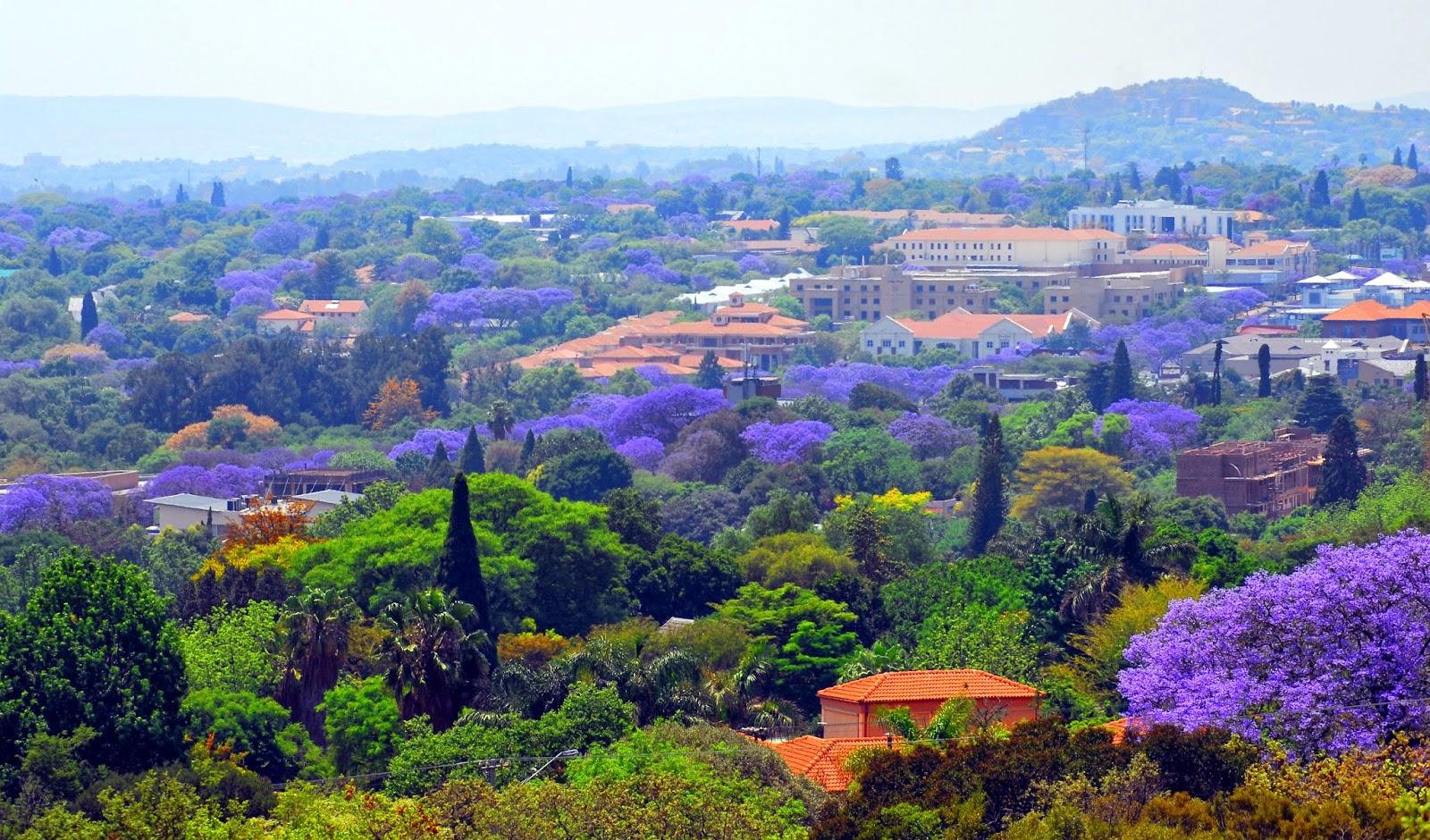 Ghé Thăm Thành Phố Hoa Phượng Tím Nổi Tiếng Của Nam Phi