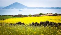 Du lịch Hàn Quốc: Jeju - Thiên đường biển đảo của xứ sở kim chi.