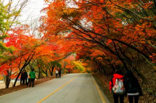 Du lịch Hàn Quốc: Mùa lá đỏ ở các Vườn quốc gia Hàn Quốc trong năm