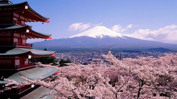 Vùng Hokkaido: Chitose - Otaru - Furano - Asahikawa Sapporo - Tokyo - Núi Phú Sĩ (Ngắm Hoa Lavender)