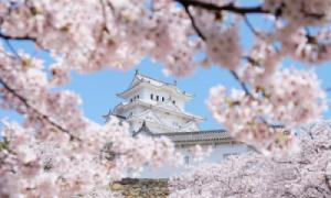 Nhật Bản hóa xứ sở thần tiên mùa hoa anh đào nở