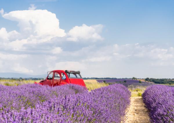 Mê mẩn ngắm cánh đồng hoa oải hương ở Valensole (Pháp)