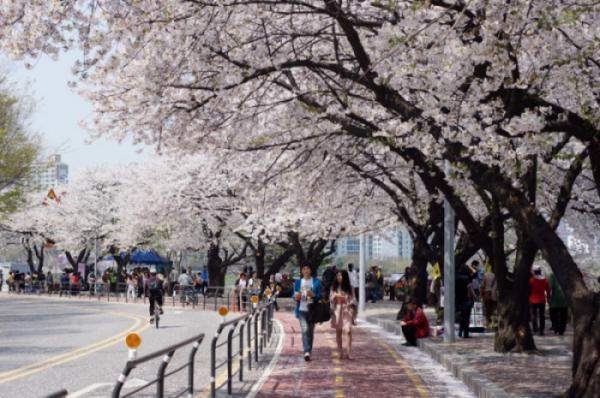 SEOUL - JEJU - NAMI - EVERLAND (VNA)