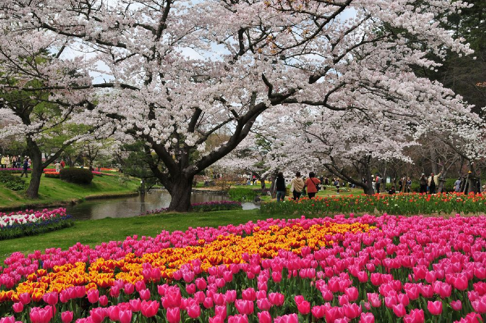 OSAKA – KOBE – KYOTO – HAMAMATSU – KAWAZU  – NÚI PHÚ SĨ – TOKYO