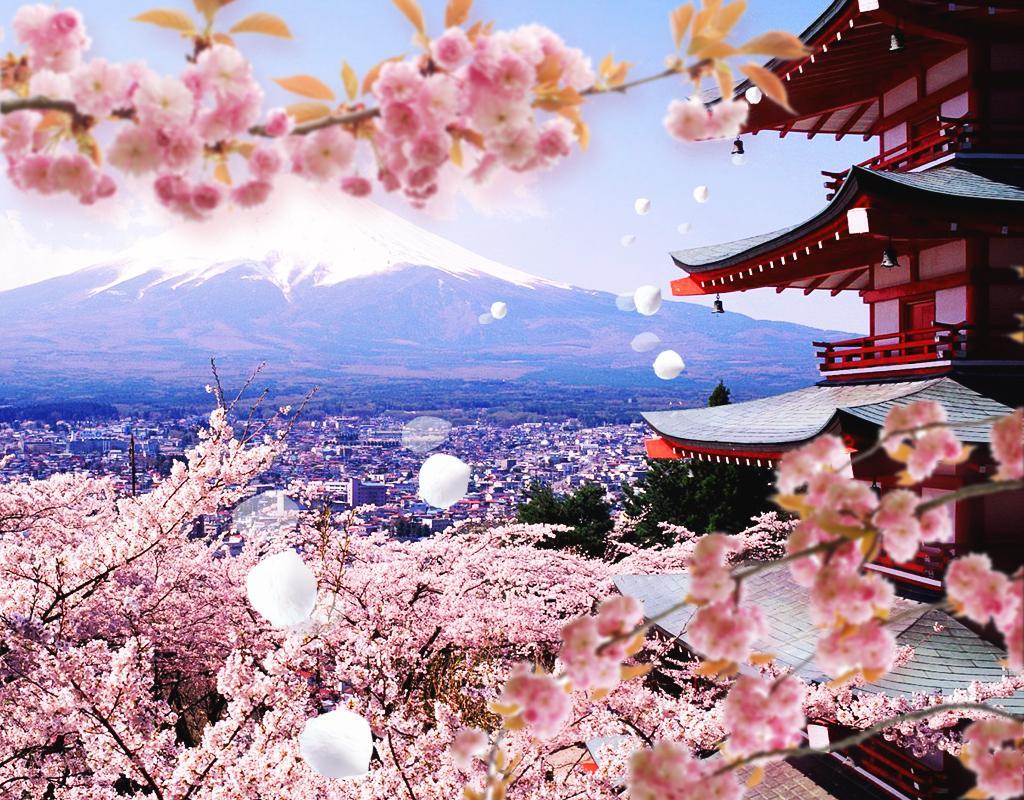 OSAKA – KOBE – KYOTO – NAGOYA –  PHÚ SĨ – TOKYO (HOA ANH ĐÀO)