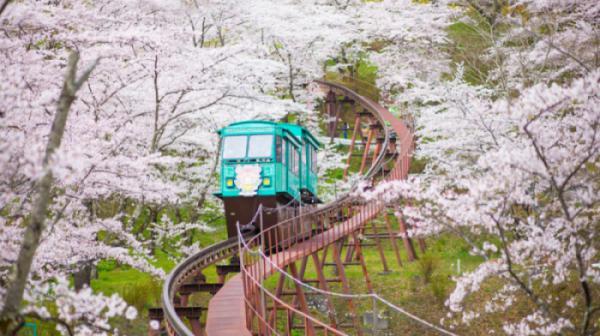 OSAKA – KOBE – KYOTO – NAGOYA –  NÚI PHÚ SĨ – TOKYO  (Hoa Anh Đào 2020)