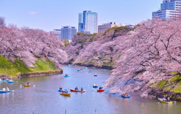 TOKYO – FUJI– HAMAMATSU – KYOTO – OSAKA (Hoa Anh Đào 2020)