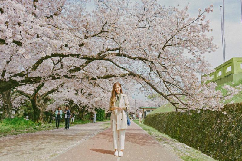TOKYO – FUJI – HAMAMATSU – KYOTO – OSAKA – NARA – NAGOYA (Hoa Anh Đào 2020)